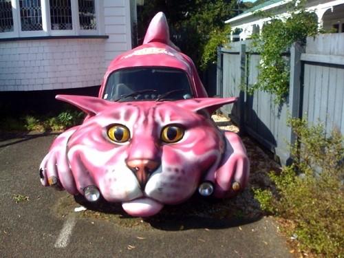 car cat kit